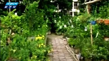 সবুজায়নে বড় ভূমিকা রাখছে নার্সারি (ভিডিও)