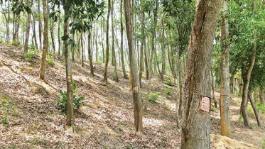 রাঙ্গুনিয়ার সরকারি জমি জাল দলিলে বেচাকেনা! জানে না বন বিভাগ